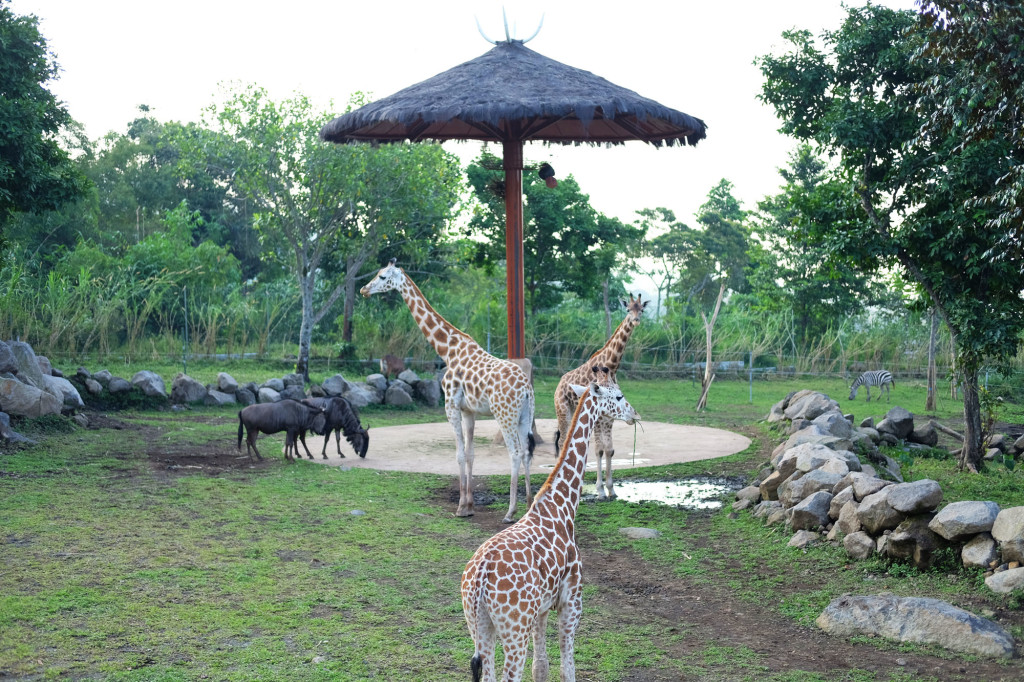 3 Baobab Safari Resort